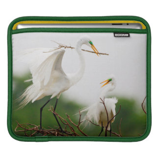 Great Egret (Ardea Alba) Breeding Activity iPad Sleeve