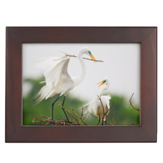 Great Egret (Ardea Alba) Breeding Activity Keepsake Box