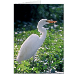Great Egret Card