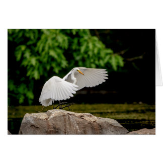 Great Egret Card
