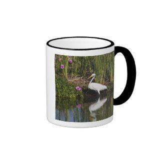 Great Egret hunting fish in freshwater marsh Coffee Mugs