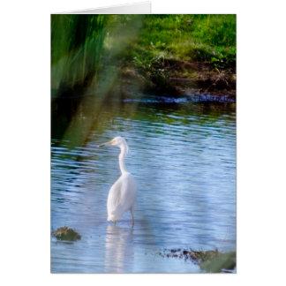 Great egret in wetlands card