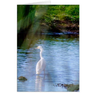 Great egret in wetlands greeting card