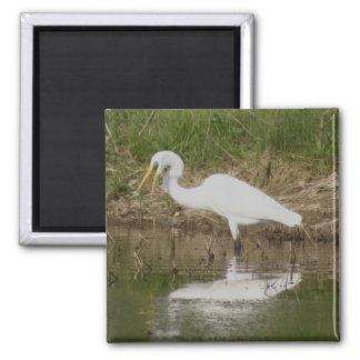 Great Egret Square Magnet