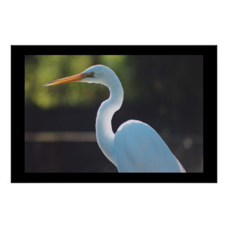 Great Egret Poster