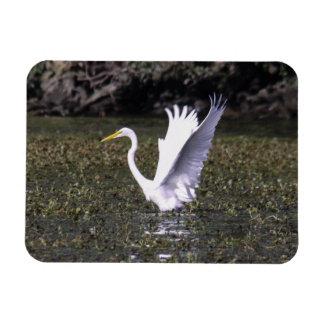 Great Egret Rectangular Magnets