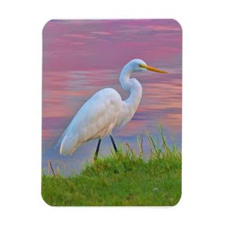Great Egret Strolling at Sunrise Flexible Magnet