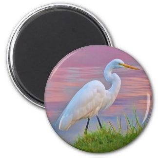 Great Egret Strolling at Sunrise Magnet