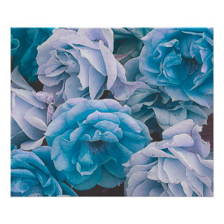 Great garden roses, blue poster