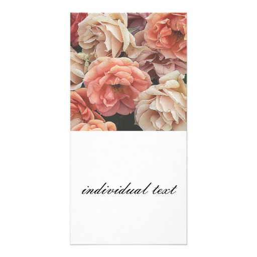 great garden roses, soft peach picture card