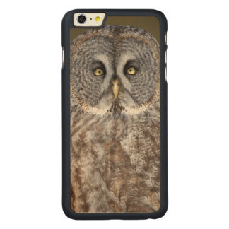 Great gray owl close-up, Canada Carved® Maple iPhone 6 Plus Case