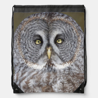 Great gray owl close-up, Canada Drawstring Bag