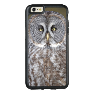 Great gray owl close-up, Canada OtterBox iPhone 6/6s Plus Case