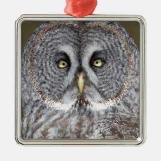 Great gray owl close-up, Canada Silver-Colored Square Decoration