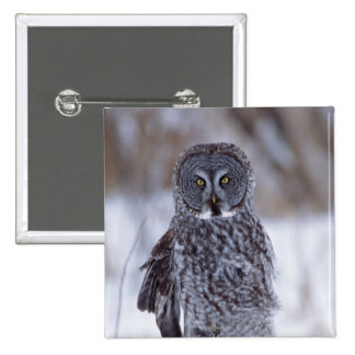 Great Gray Owl near Pine City MN, 15 Cm Square Badge