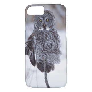 Great Gray Owl near Pine City MN, iPhone 8/7 Case