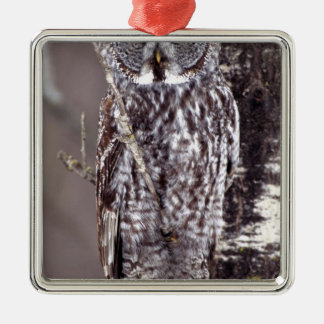 Great Gray Owl on an Aspen tree Christmas Ornament