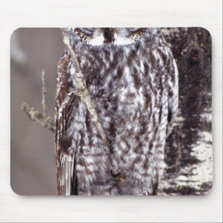 Great Gray Owl on an Aspen tree Mouse Mat