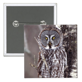 Great Gray Owl, Pine City MN perched on Aspen Pinback Buttons