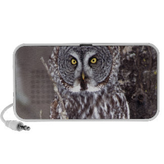 Great Gray Owl, Pine City MN perched on Aspen Travel Speaker