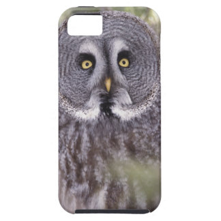 Great Gray Owl (Strix nebulosa) Case For The iPhone 5