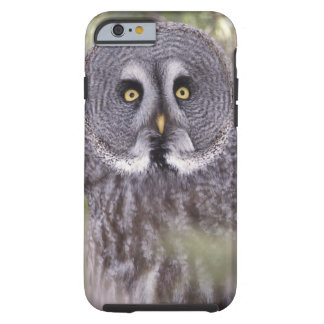 Great Gray Owl (Strix nebulosa) Tough iPhone 6 Case