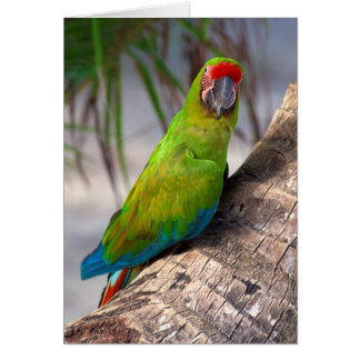 Great green macaw on a tree card