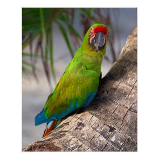 Great green macaw on a tree poster