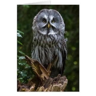 Great grey owl birds of prey greeting card