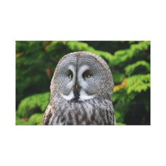 Great Grey Owl Canvas Prints