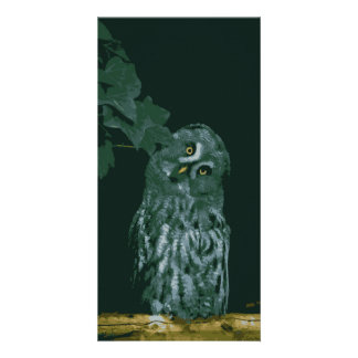 Great Grey Owl Card Photo Card
