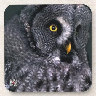 Great Grey Owl Drink Coasters