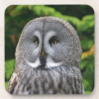 Great Grey Owl Beverage Coasters