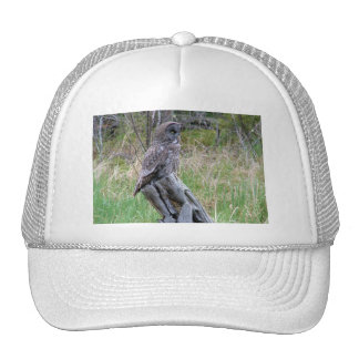 Great Grey Owl in the Wild Mesh Hats