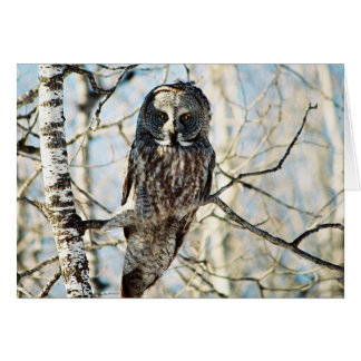 Great Grey Owl in Tree Cards