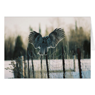 Great Grey Owl Landing Card