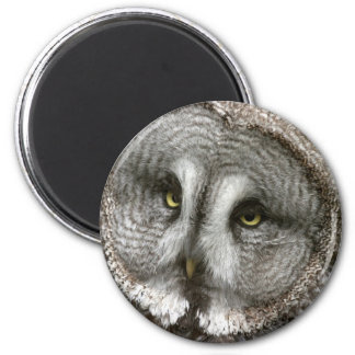 Great Grey Owl Magnet Magnet
