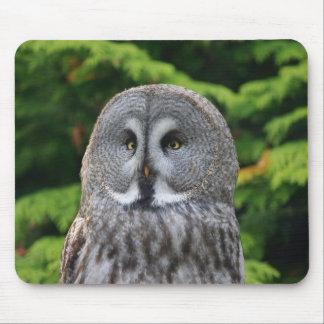 Great Grey Owl Mousepads