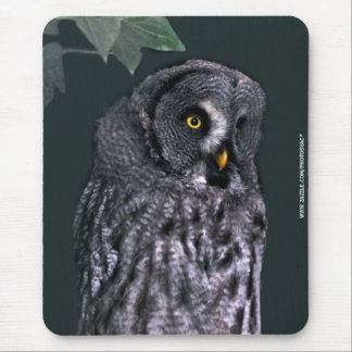 Great Grey Owl Mouse Pads