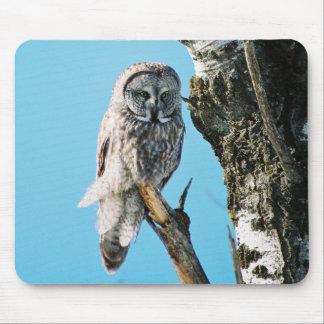 Great Grey Owl Mousepad