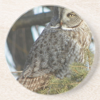 Great Grey Owl Photo Gift Drink Coasters