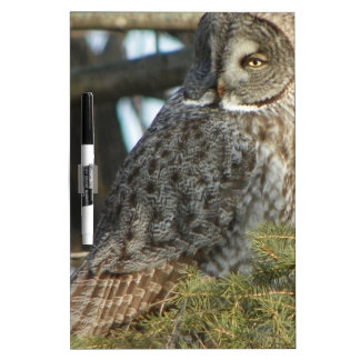Great Grey Owl Photo Gift Dry Erase Whiteboards