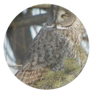 Great Grey Owl Photo Gift Plates