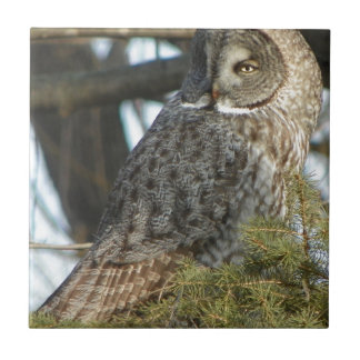 Great Grey Owl Photo Gift Small Square Tile