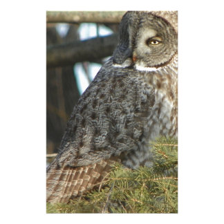 Great Grey Owl Photo Gift Stationery Design