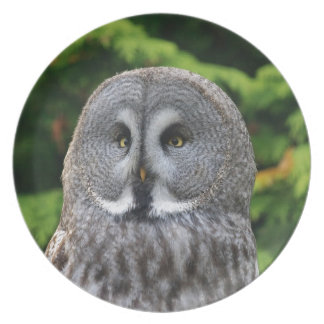 Great Grey Owl Party Plates