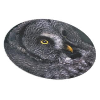 Great Grey Owl Dinner Plates