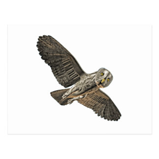 Great Grey Owl Post Cards