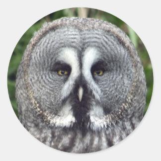 Great Grey Owl Round Sticker