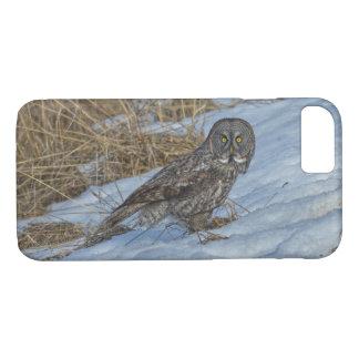 Great Grey Owl & Snow Wildlife Photo Portrait iPhone 7 Case